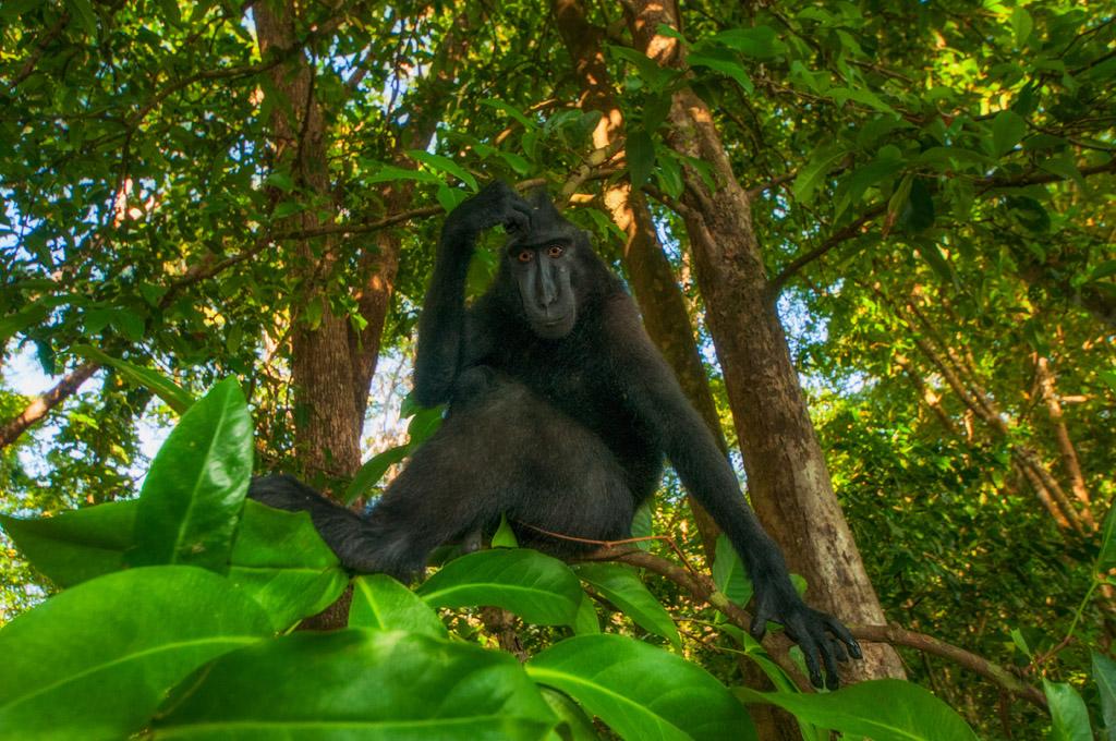 Le scimmie che sorridono