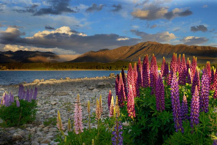 Sito di incontri gratuito in Nuova Zelanda
